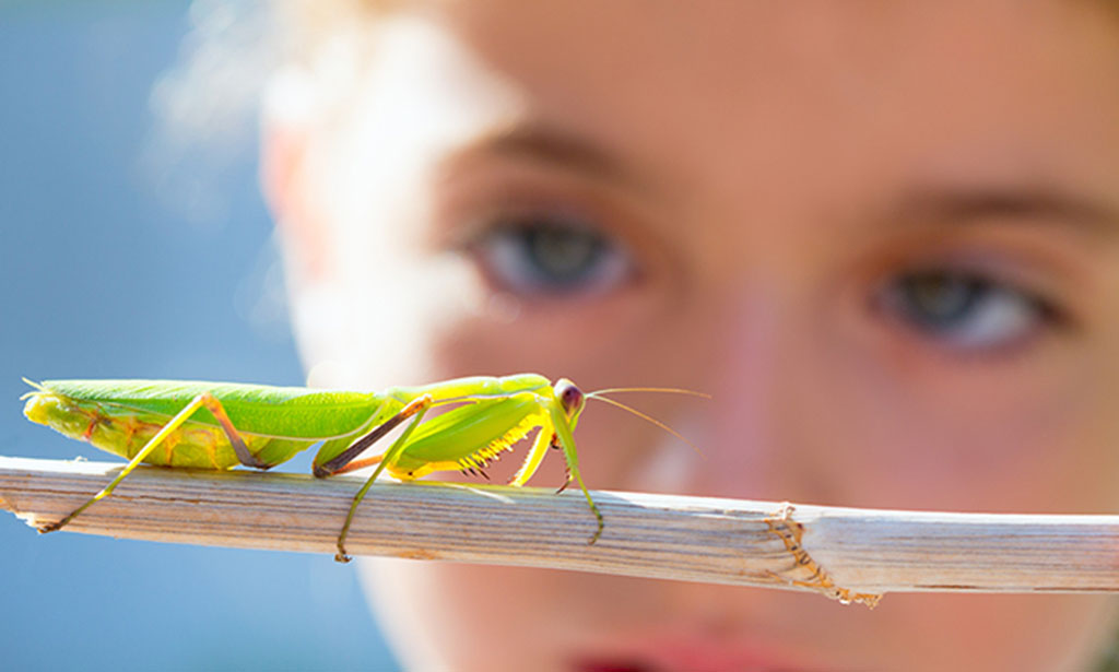 http://www.dreamstime.com/stock-photo-kid-small-girl-looking-praying-mantis-image27239240