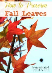 Bridgeway-homeschool-How-to-Preserve-Fall-Leaves-with-Glycerin