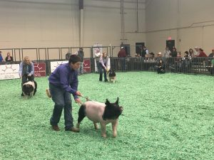 student showcase, Student Showcase: Brian Brugman's 4H Success Paves the Way to a Bright Future