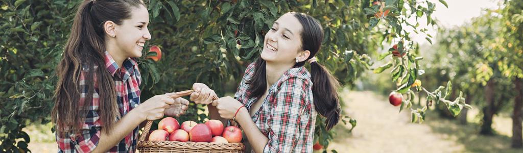 Homeschool Stress, Fall Fun at (or Near) Home: Part 1